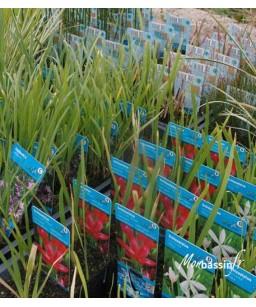 pack 10 plantes pour le bassin