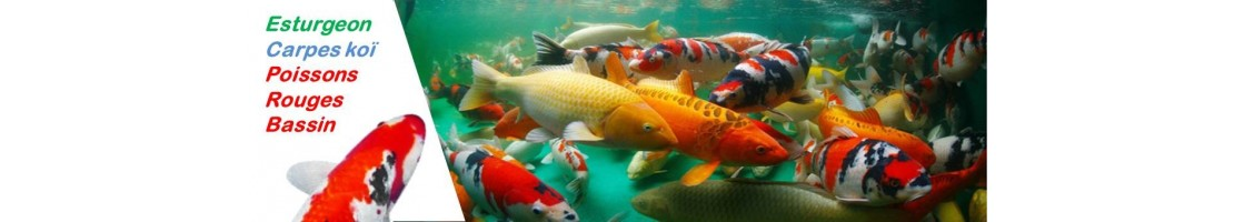 Les poissons de bassin